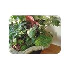 Магазины растений для дома и сада