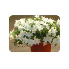 Цветы и растения