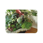 Растения для дома и сада
